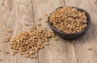 Covid-19 Wheat germ